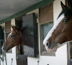 HorsesHead Facilities
