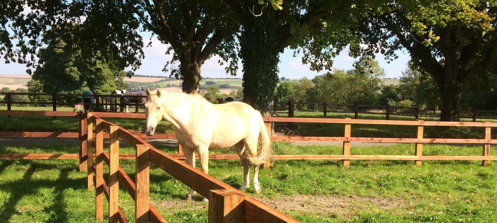 horse-in-paddock